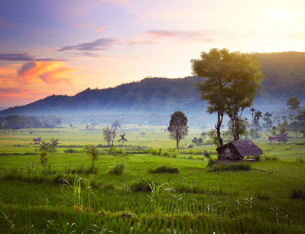 Rice fields and mountains on the horizon, Bali, Indonesia