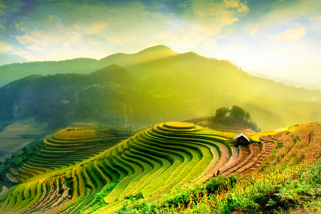 Rice fields on terraced, Mu Cang Chai, Vietnam