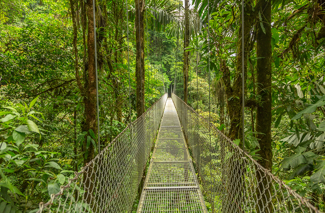 Bridge at natural rainforest park, Costa Rica