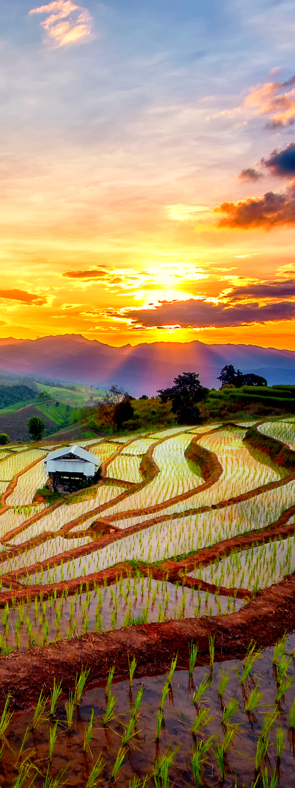 Terraced Paddy Field in Mae-Jam Village, Chaing Mai Province, Thailand