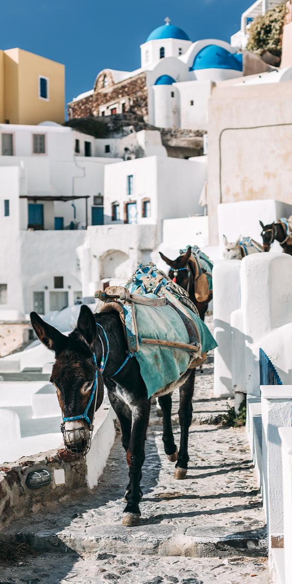 Donkeys on the street of Oia, Santorini (Cyclades), Greece