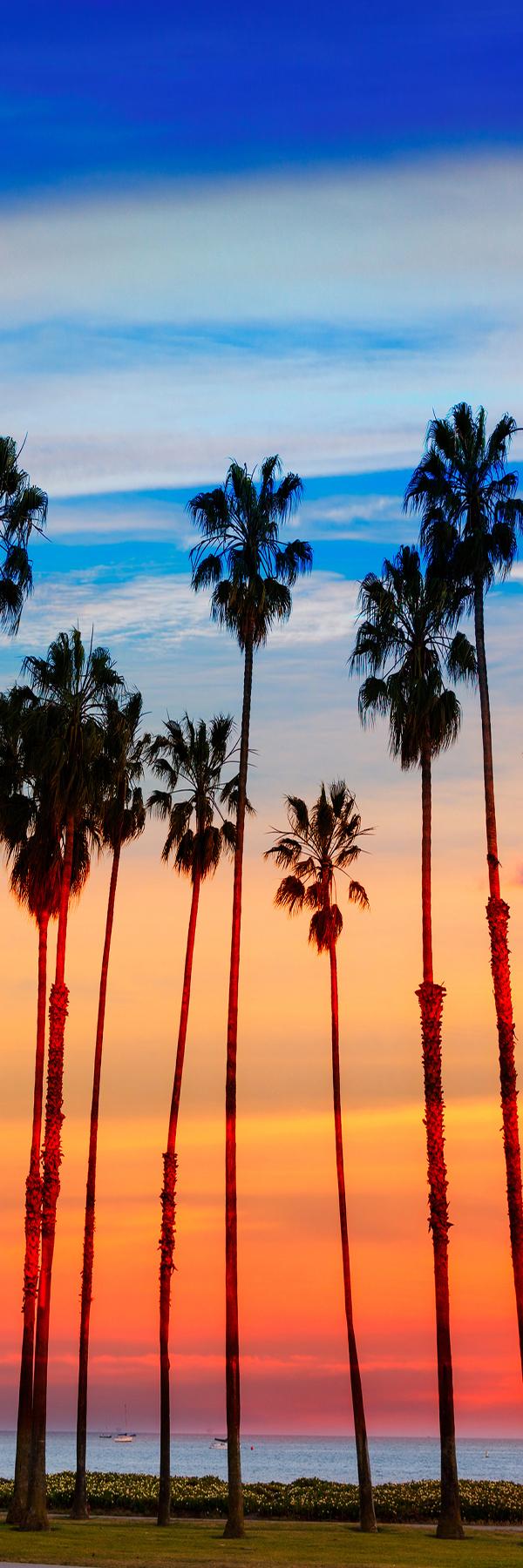 Tree Rows, Santa Barbara
