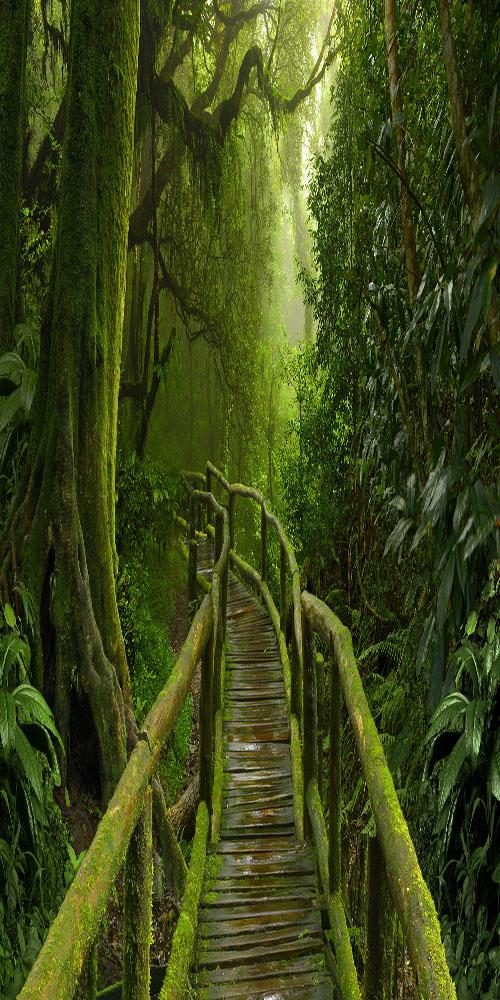 Jungle, Nepal